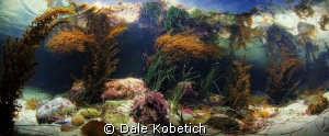 tide pool panorama ... by Dale Kobetich 